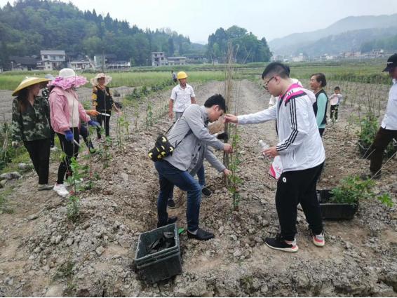 迎五一 公司组织开展助农劳动竞赛