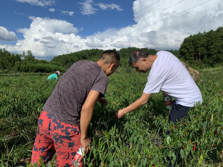 总经理谢兵到万山区察看辣椒产业发展状况